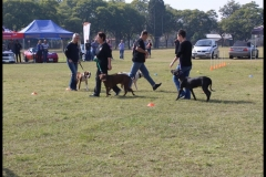 PBFSA Obedience Demo
