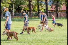 PBFSA Obedience Training